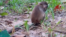 Baby monkey cry because of his mom, baby monkey consolation to the small baby monkey, Dont cry