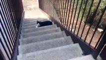 Ce chat n'aime pas du tout quand sa maitresse a l'odeur d'un autre chat !