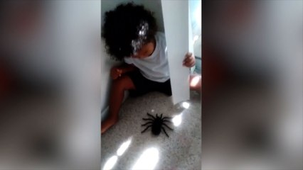 Toddler Boy Scared of Fake Spider!