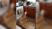 Dog Has A Unique Way Of Asking For Food