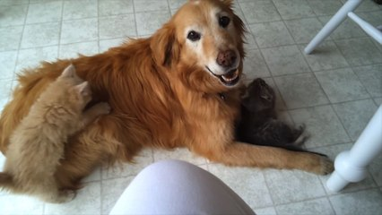 Kittens Play with An Old Pup!