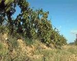 Au grès du vent, des images de Martigues et Carro.