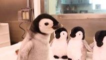 Ce bébé pingouin est juste adorable... Une vraie peluche