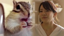 Bikke The Chip, Instagram's Famous Chipmunk Celebrity