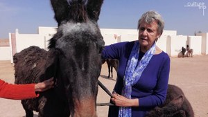 Why You Need to Visit This Moroccan Sanctuary for Abandoned Donkeys