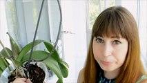 Орхидеи: уход за фаленопсисами летом и ответы на некоторые вопросы