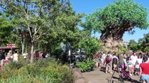 A Wild Day At Disney's Animal Kingdom! | Flights Of Wonder Closing Soon & Watching The Lion King!