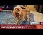 10 Most Affectionate Dog Breeds