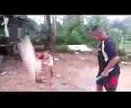 Funny Videos Of Animals  dog video  comedy videos for kids  Crazy Animal Videos