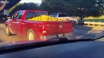 Ce pick-up roule... avec des milliers de pommes de terre dans le coffre !