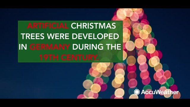 5 facts about Christmas trees