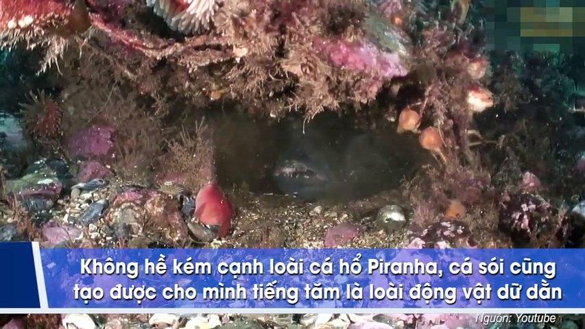 Những sinh vật biển kỳ dị dưới đáy đại dương khiến ai thấy cũng hết hồn tưởng là quái vật trong phim kinh dị | Godialy.com