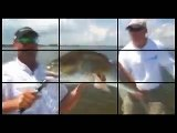Monster Goliath Groupers - Giant 600 Pound Goliath Bass Grouper - Chew On This