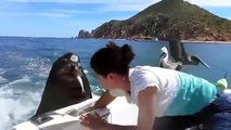 The sea lion asks for fish from people in the boat