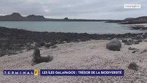 """Les otaries, """"mascottes"""" des Galapagos"""