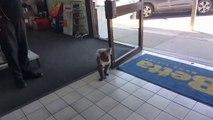 Quand un koala entre faire son shopping dans un magasin