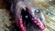 Découverte incroyable d'un requin préhistorique à 300 dents au Portugal