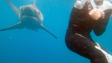 Travis Pastrana Becomes Shark Bait