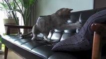 【モアクリ】 動くネコと動かないネコ - Static Cat and Dynamic Cat -