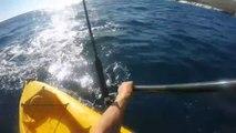 Ce kayakiste lutte contre un requin très agressif qui ne le lache pas