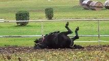 Vive l'automne ! Ce cheval s'éclate avec les feuilles mortes