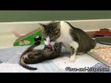 Adorable Kittens Try to Play During Bath Time