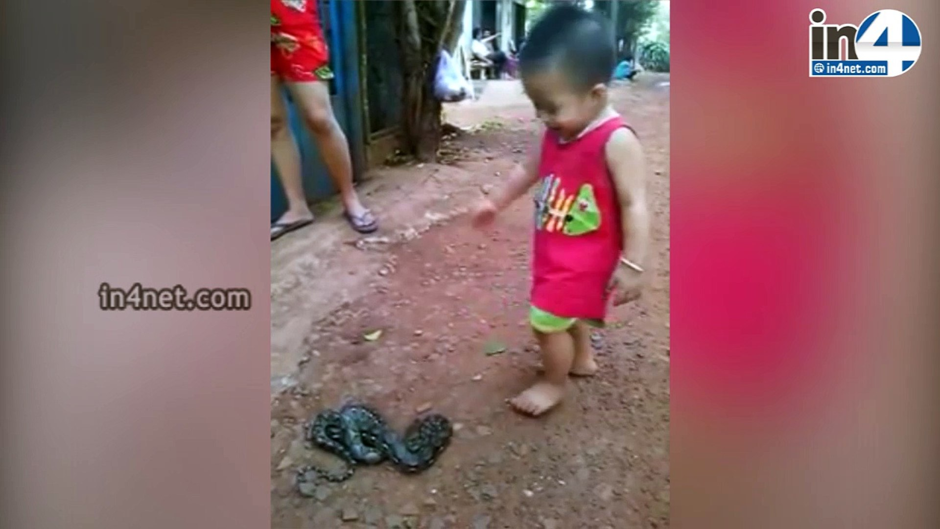 KID PLAYING WITH SNAKE | IN4NET