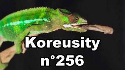 Koreusity n°256