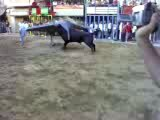 taureau fou suite 3