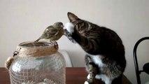 Moment magique entre un chat et un petit oiseau... Calin trop mignon