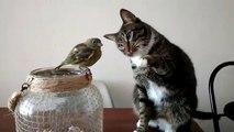 Aussi adorable qu'insolite : ce chat fait des câlins à un oiseau
