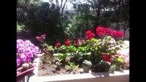 Frédéric et ses fleurs sur son balcon de Canto Perdrix
