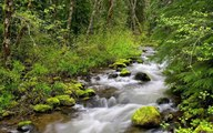 Relaxation music for sleep meditation and relaxing Calm Forest 30 minutes