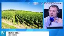 """Mortifère spéculation des vins de Bourgogne : est-ce la fin de """"l'esprit familial"""" ?"""