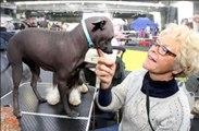 Exposition canine : des chiens vedettes à Tarbes