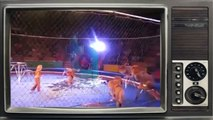 Terrorist lions. Lion attacks and mauls trainer during circus show in Ukraine