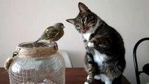 Un chat caresse gentiment un oiseau - Quand tu as faim mais que tu es au régime !
