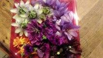 Appétit - Les Rutardises Florales