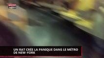 Un rat crée la panique dans le métro de New-York (Vidéo)