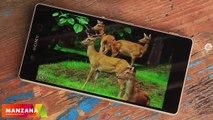 Sony Xperia Z3+ Dual подробный обзор от FERUMM.COM. Минусы, достоинства, особенности Xperia Z3+ Dual