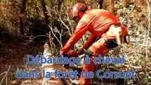 Aix-Les-Bains : 30 mètres cubes de bois débardés par un cheval