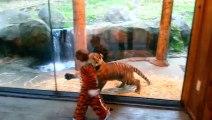 Ce gamin déguisé en tigre s'amuse avec un jeune tigre... Moment incroyable