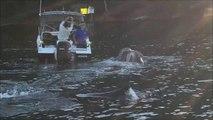 Une baleine vient demander de l'aide à des pecheurs... Incroyable