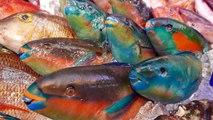 日本路邊小吃 - 大彩虹魚生魚片日本沖繩