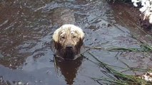 Enorme bain de boue pour ce chien qui se pourrit comme jamais !