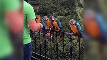 Des perroquets sauvages réclament à manger !