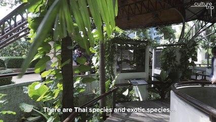 Explore Bangkok's Snake Farm