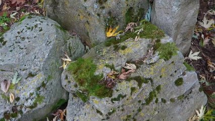 Jardin La Parmélie, une pierre tout à fait extraordinaire! n° Ami des Jardins de janvier p 21 (video