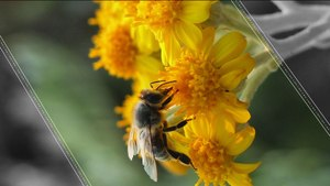 Honey is Contaminated and It's Killing Bees