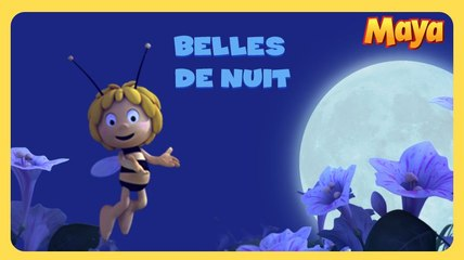 Maya l'abeille - Belles de nuit